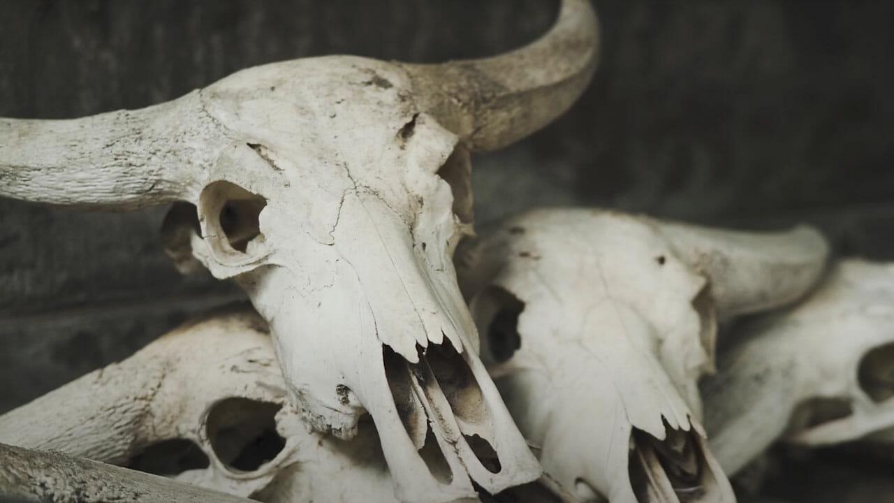 Skull-Bliss-4