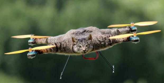 catcopter-drone-blog